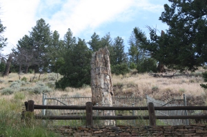 The Petrified Tree